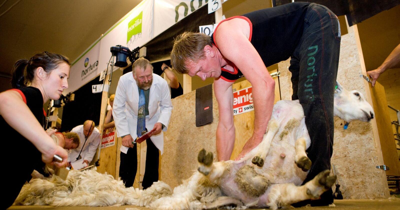 KVALITET: I år er det ekstra viktig å levere ull av god kvalitet. Arkivfoto: Marcus Pasveer