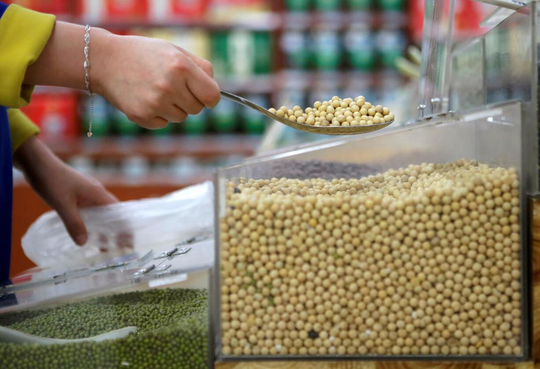 Det vites ikke om soyabønnene på bildet er genmodifiserte. En fersk rapport konkluderer da også med at nettopp det ikke har noe å si når det gjelder helsefare ved å spise soyabønnene. Foto: REUTERS/NTB SCANPIX