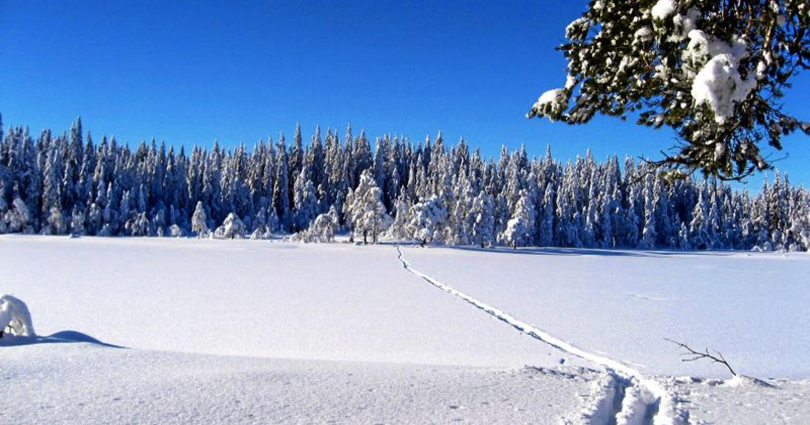 Gratis: 99,9 prosent av Norge lar seg besøke med ski. Foto: Erik Vestgård