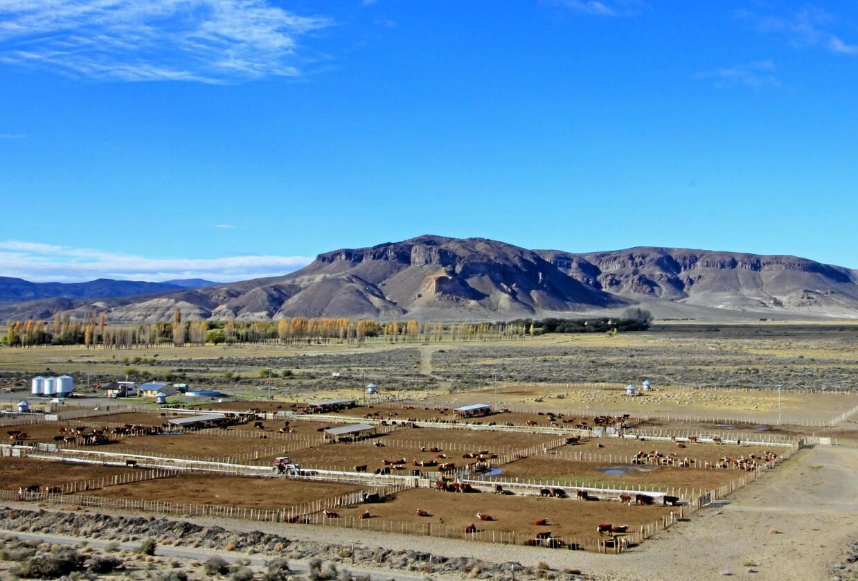 Mercosur: Norsk landbruk i spill. Hvem vil tjene på avtalen? Bildet er fra en større farm i Patagonia, Argentina. Foto: Martin Schneiter / Mostphotos