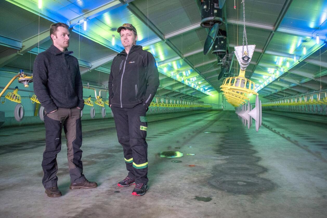 Tomme hus: Kyllingprodusentene Tom Kristian Mork (t.v.) og Jørgen Sæther i Namdalseid satset stort på kylling. Nå tvinges de ut av næringa av Nortura.