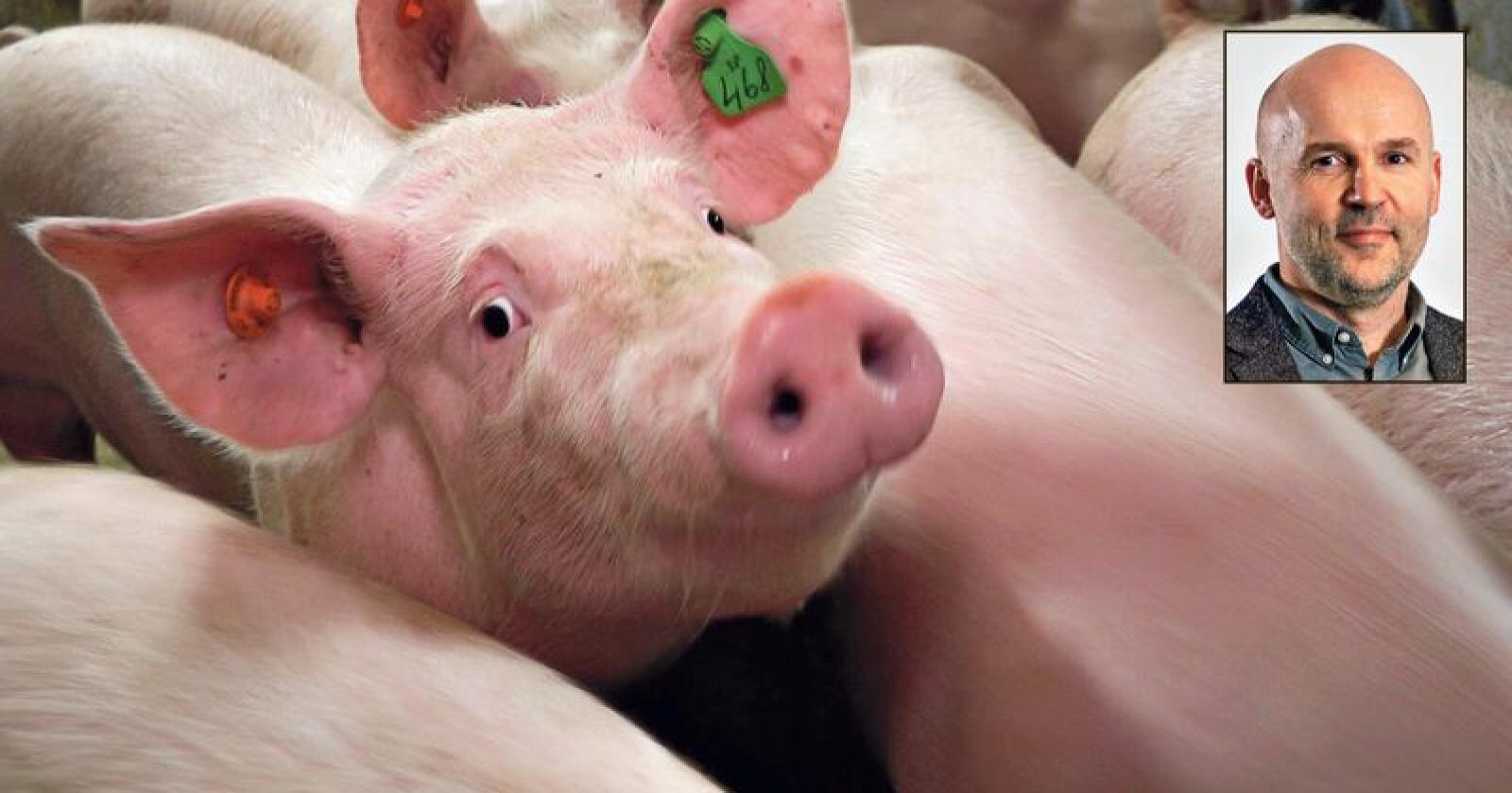 – Nå mente vi det var rom for å øke målprisen med 50 øre. Alt svinebøndene har fått de siste fire årene, er kostnadsvekst, sier styreleder Tor Henrik Jule i Norsvin. Foto:  Norsvin og Hallfrid Simonsen