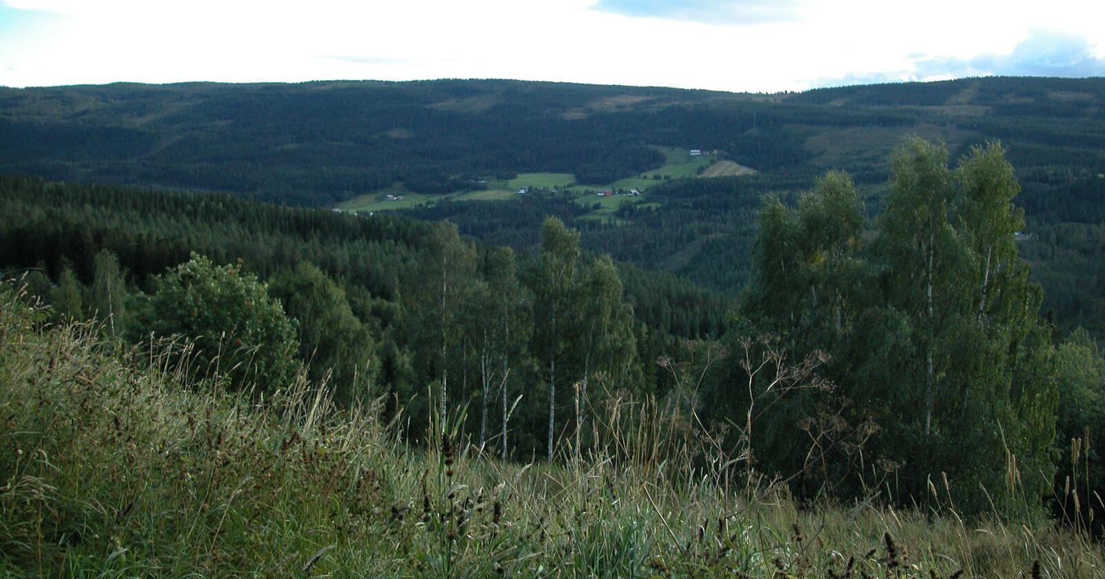 Mange av turgåerne i sommer, ventes å være uerfarne i skogen. Glommen Skog er bekymret for at flere vil ta seg vel mye til rette, og ber folk ta hensyn Foto: Aud Klingen Sjøvik