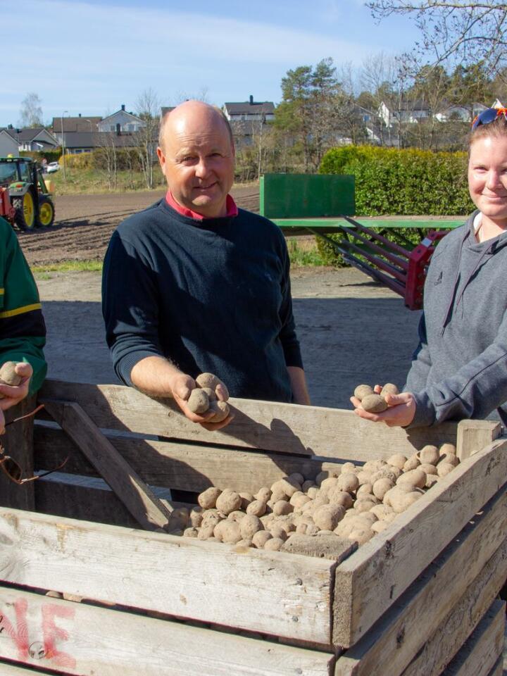 Våronn: Leif Løwe, Bernt Løwe og Ida Løve er godt i gang med å sette poteter. Foto: Tun Byrå