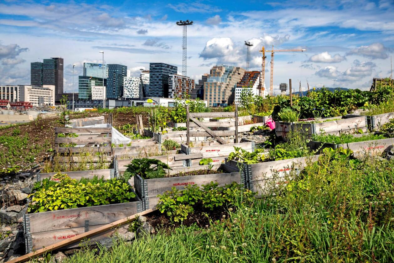 Urbant: Matproduksjon i byene kan gi bybefolkningen eierskap til hva de spiser, skriver Joakim Gitlestad. Foto: Erlend Aas / NTB scanpix