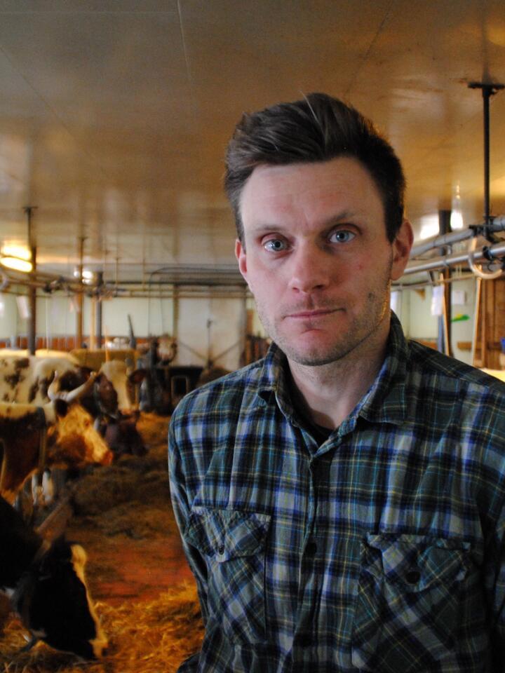 Sondre Aasan er melkebonde i Flatdal i Seljord. Han har 15 melkekyr, delvis telemarksfe og delvis NRF, på båsfjøs. Foto: Lars Bilit Hagen