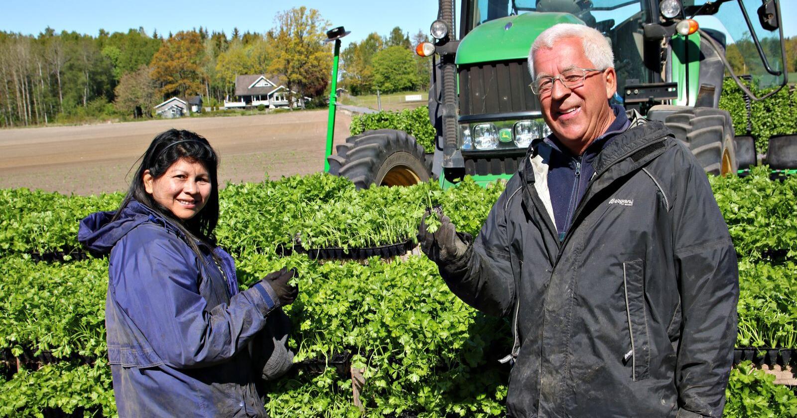 Trivelig: Vanessa Martinez og Olav Führ er permittert fra sine vanlige jobber, og trives godt med å plante selleri. (Foto: Lars Olav Haug)