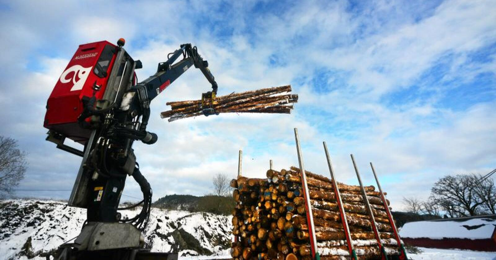 Eksport: Nesten 4 av 10 trestokker blir eksportert. Foto: Siri Juell Rasmussen