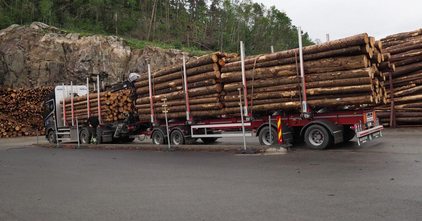 Tvilsamt: Skogbruket si miljøsertifisering har hol, skriv innsendaren. Foto: Siri Juell Rasmussen