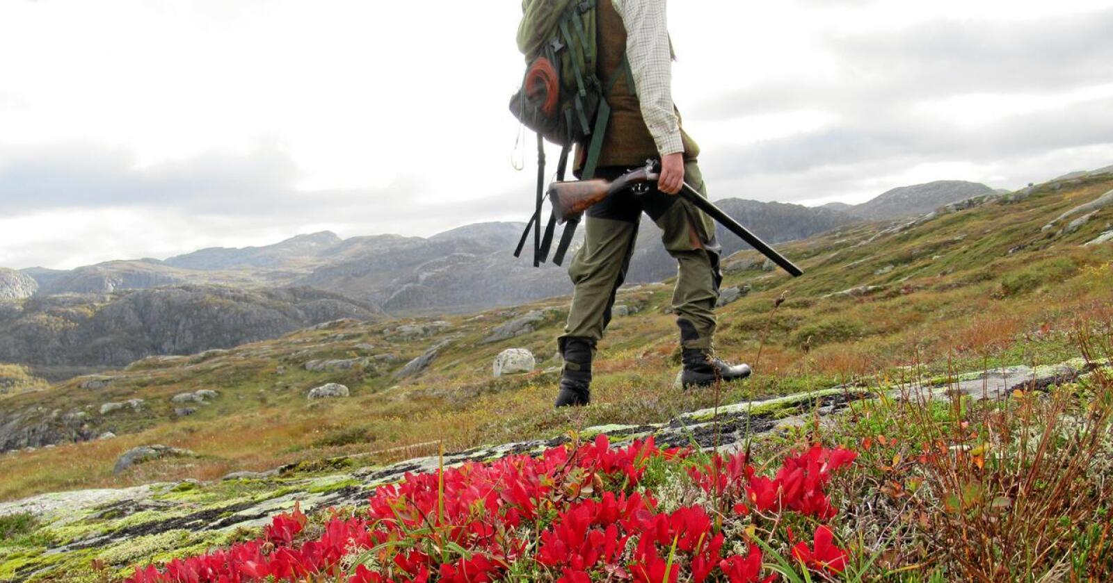 Njardarheim er et fjellområde i Setesdal Vesthei med en særs interessant historie. Illustrasjonsfoto: Trond Gunnar Skillingstad/ Statskog SF