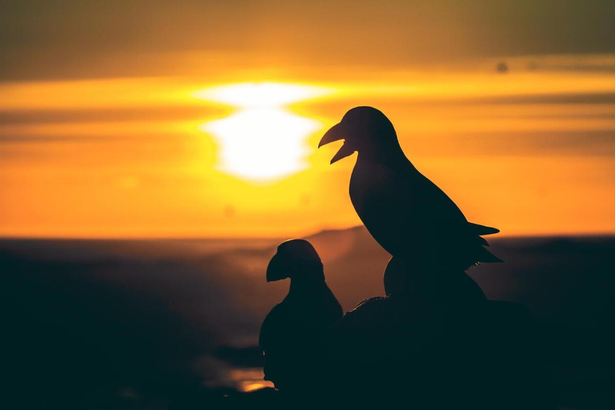 Ikke sikret: At en fugleart får en egen handlingsplan er naturligvis ikke ensbetydende med at artens framtid som norsk hekkefugl er sikret til evig tid. Foto: Håvard Eggen