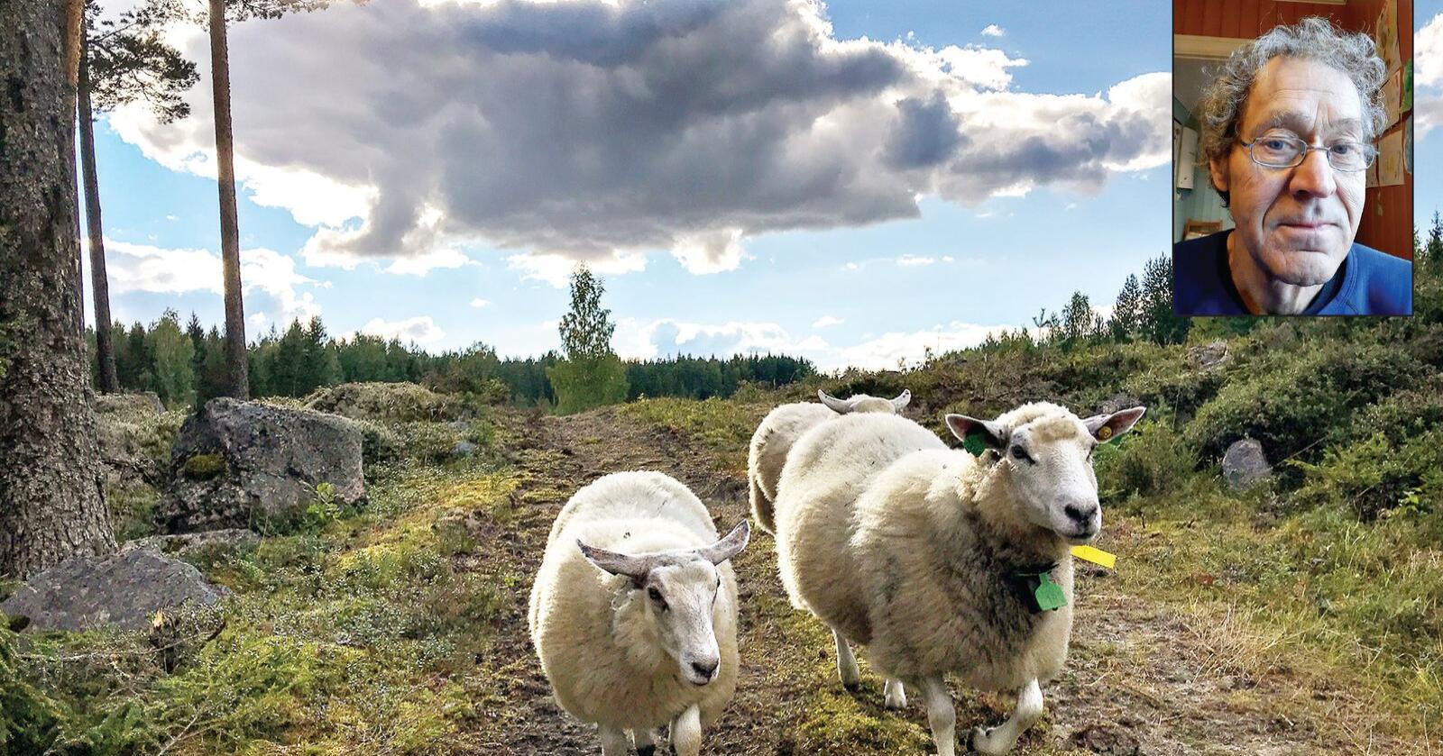 – Det er ikke rart at kjøttforbruket går ned når vi ikke får kjøpt det kjøttet vi har lyst på, sier Øyvind Aalerud. Foto: Privat