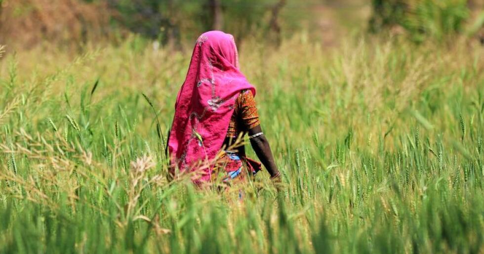Livsgrunnlag: Rundt 54 prosent av Afrikas arbeidende befolkning er avhengig av landbruk som livsgrunnlag, inntekt og arbeid, skriver innsenderne. Foto: Nich Bayss / Mostphotos