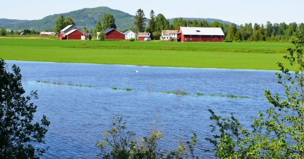 Store mengder melk har gått rett i sluket som følge av flommen i Glomma. Her sees Glomma under en tidligere flom. Grastustene i midten er den egentlige grensa mellom vann og åker . Arkivfoto: Bondebladet