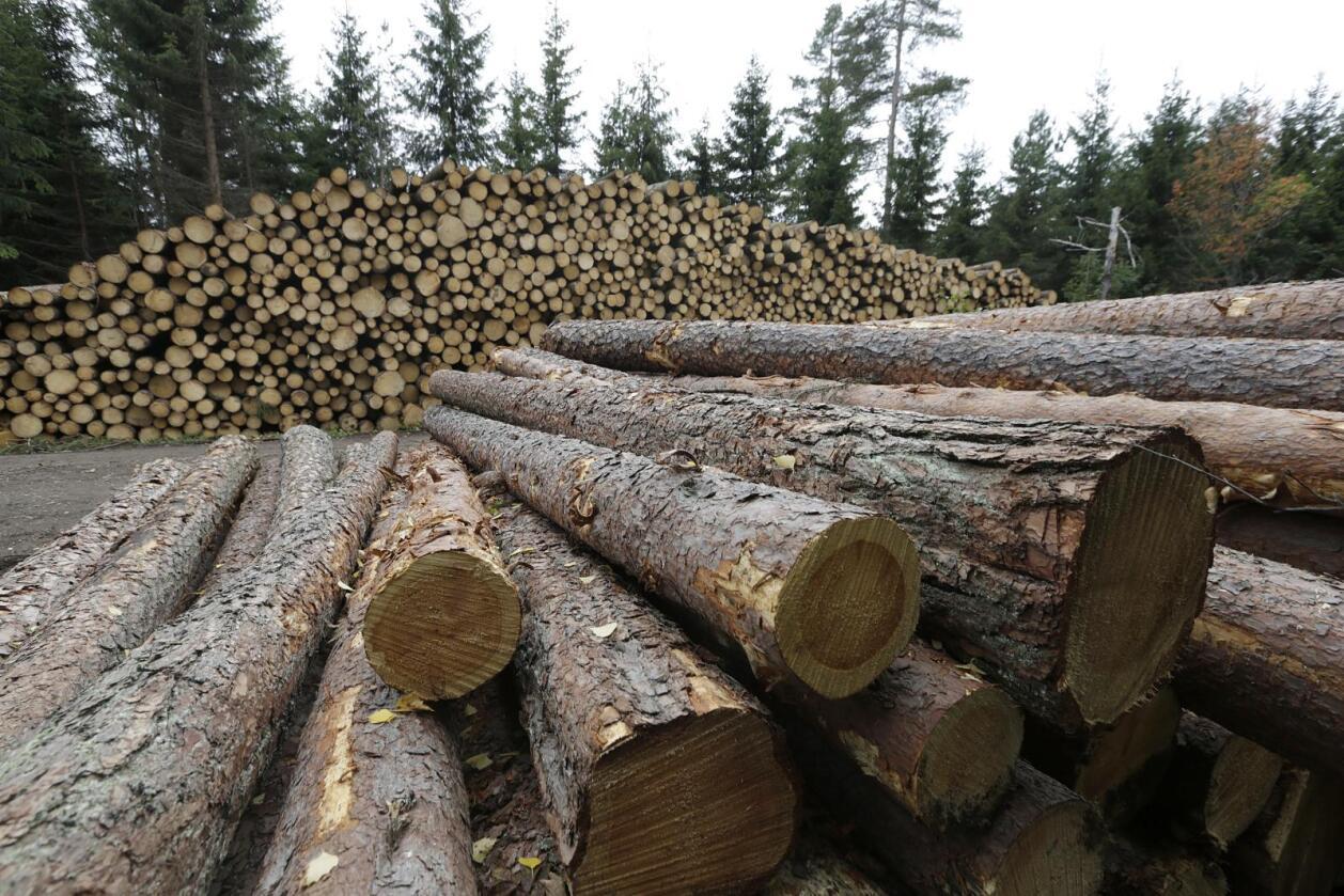 Tømmeravverkinga i år nærmar seg rekordane frå slutten av 1980-talet. Foto Vidar Ruud / NTB scanpix
