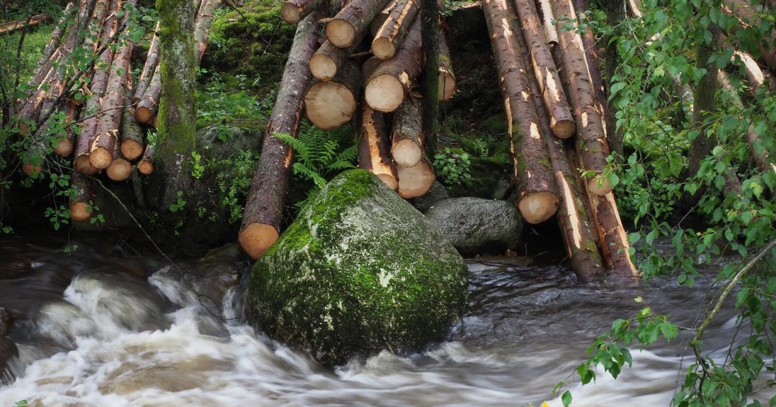 Den påtroppende regjeringen sier de vil satse mer på skog, skogindustri og klimaeffekten den kan ha. Foto: Siri Juell Rasmussen