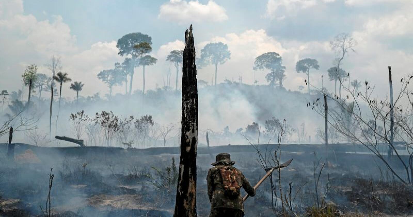 Uvanlig store skogbranner har herjet i Brasil denne sommeren. Foto: Leo Correa/AP/NTB scanpix