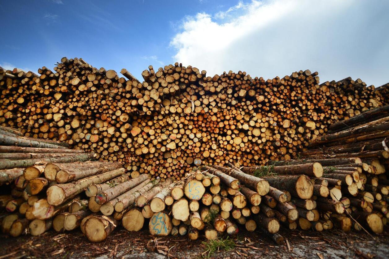 Tømmerhogsten aukar, men færre sel tømmeret, syner tal frå SSB. Illustrasjonsfoto: Siri Juell Rasmussen
