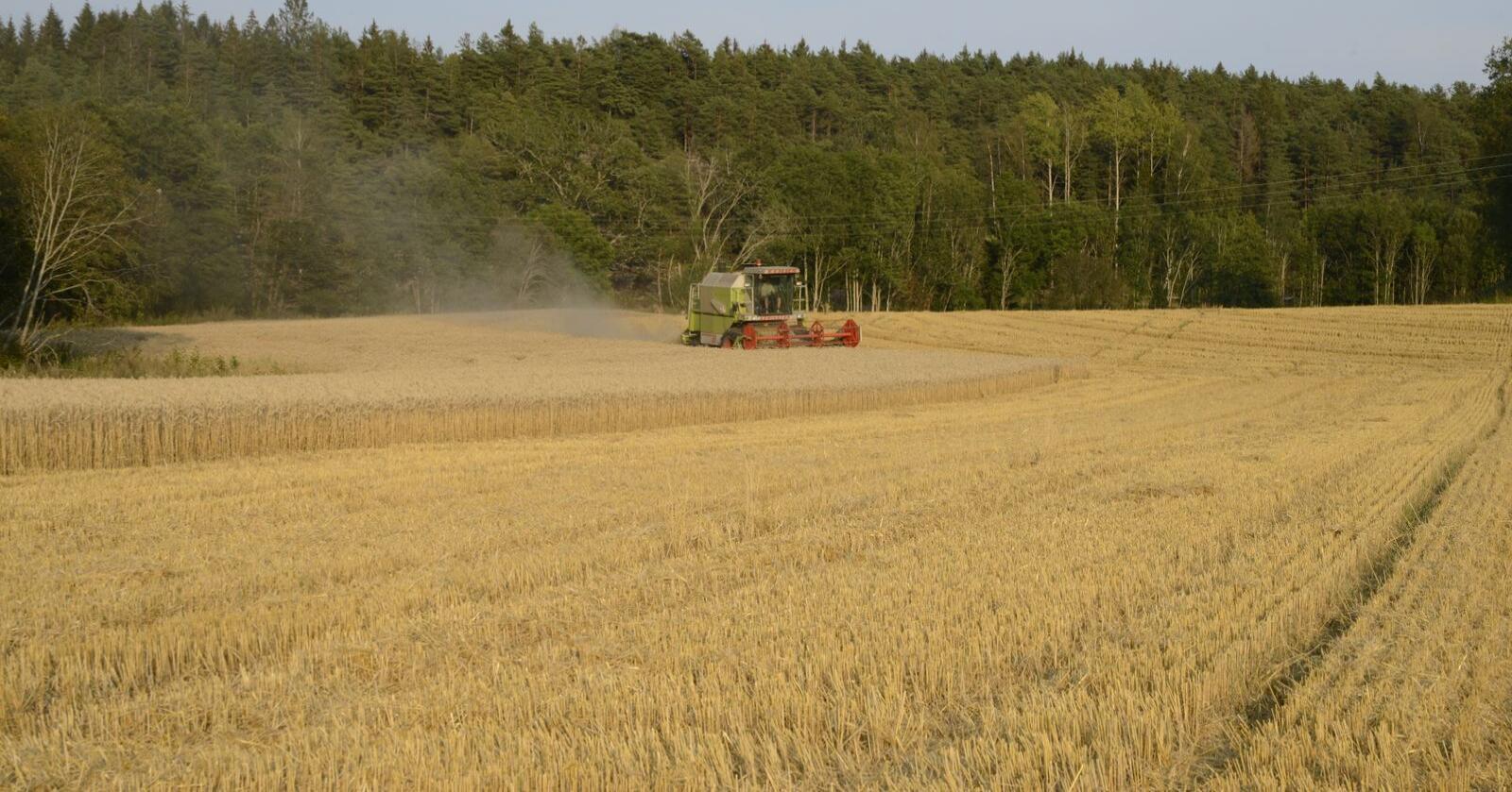 """Korn er den enkeltfaktoren som har størst betydning for det totale matforbruket. Klassifiseringa """"korn som mel"""" utgjer ein knapp tredel av samla energikonsum. Foto: Mariann Tvete"""