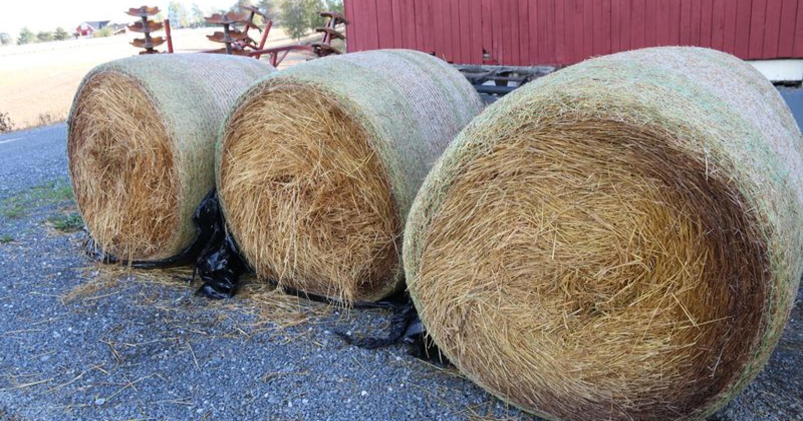 Må behandles: Halmen bør behandles med amoniakk for å gjøre fiberen mer fordøyelig. Foto: Øystein Heggdal.