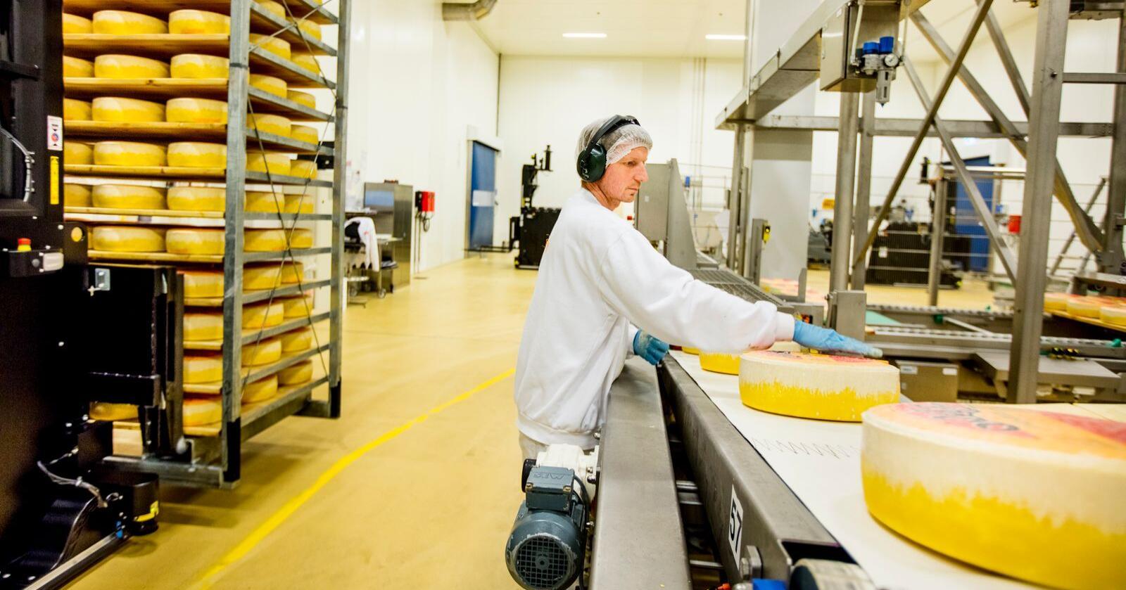 Bildet viser produksjon av Jarlsbergost. Foto: Bo Mathisen