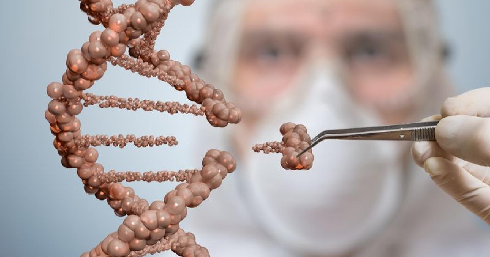 Selv om genredigering er mer presist enn eldre GMOer som er i bruk i dag betyr ikke det at det ikke finnes en stor og uavklart risiko for negative konsekvenser, mener artikkelforfatterne Børre Solberg og Markus Brun Hustad i Økologisk Norge. Foto: Shutterstock