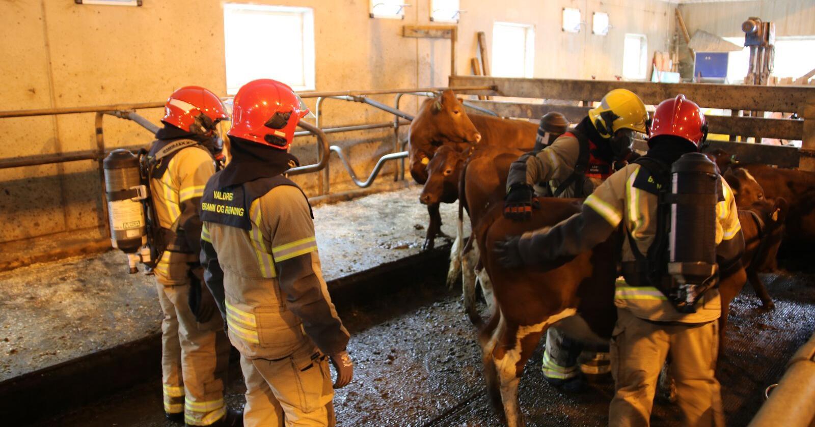 Totalt var på 132 branner med skader over 100000 kroner i 2019, herav tre branner med tap av dyreliv. Dette er det laveste som er registrert av Landbrukets brannvernkomité. Bildet er fra en brannøvelse i Sør-Aurdal kommune i 2019. (Foto: Karl Erik Berge)