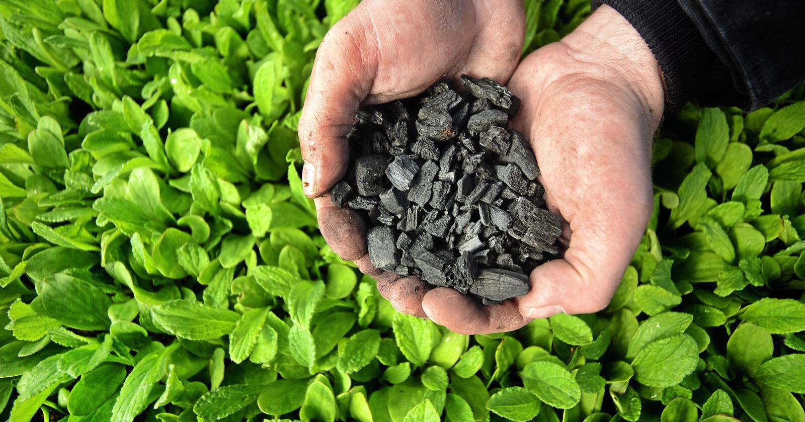 Anlegget skal lage biokull av rester fra landbruket og skogbruket. Biokullet kan igjen brukes i jorden til for eksempel grønnsaker. Illustrasjonsfoto: Siri Juell Rasmussen