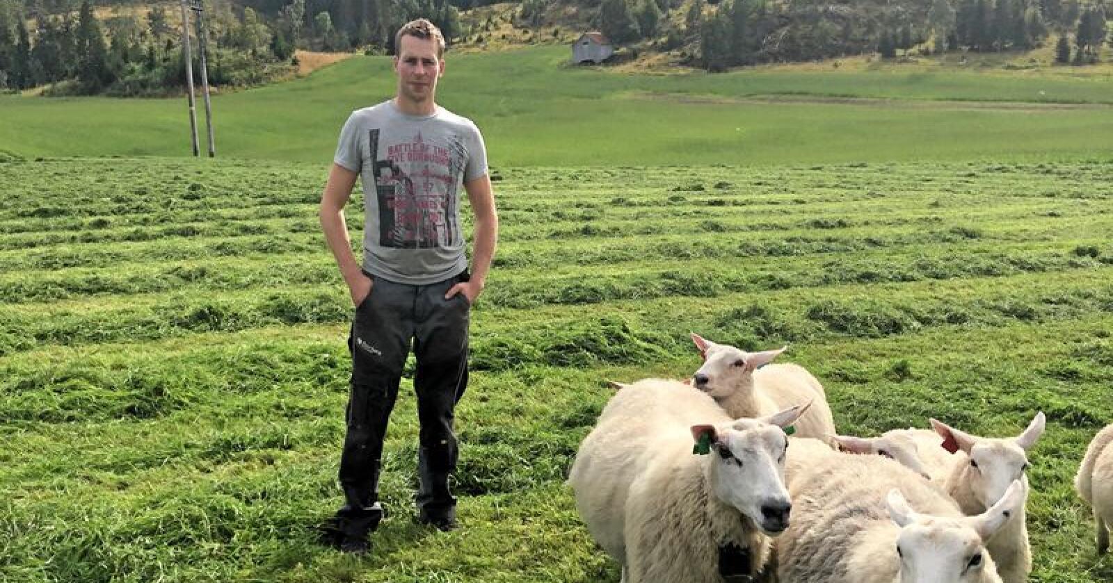 Ole Reidar Davidsen er sauebonde i Hemnes i Nordland. Han frykter at opptil 200 av lammene hans kan være tatt av jerv. Foto: Privat