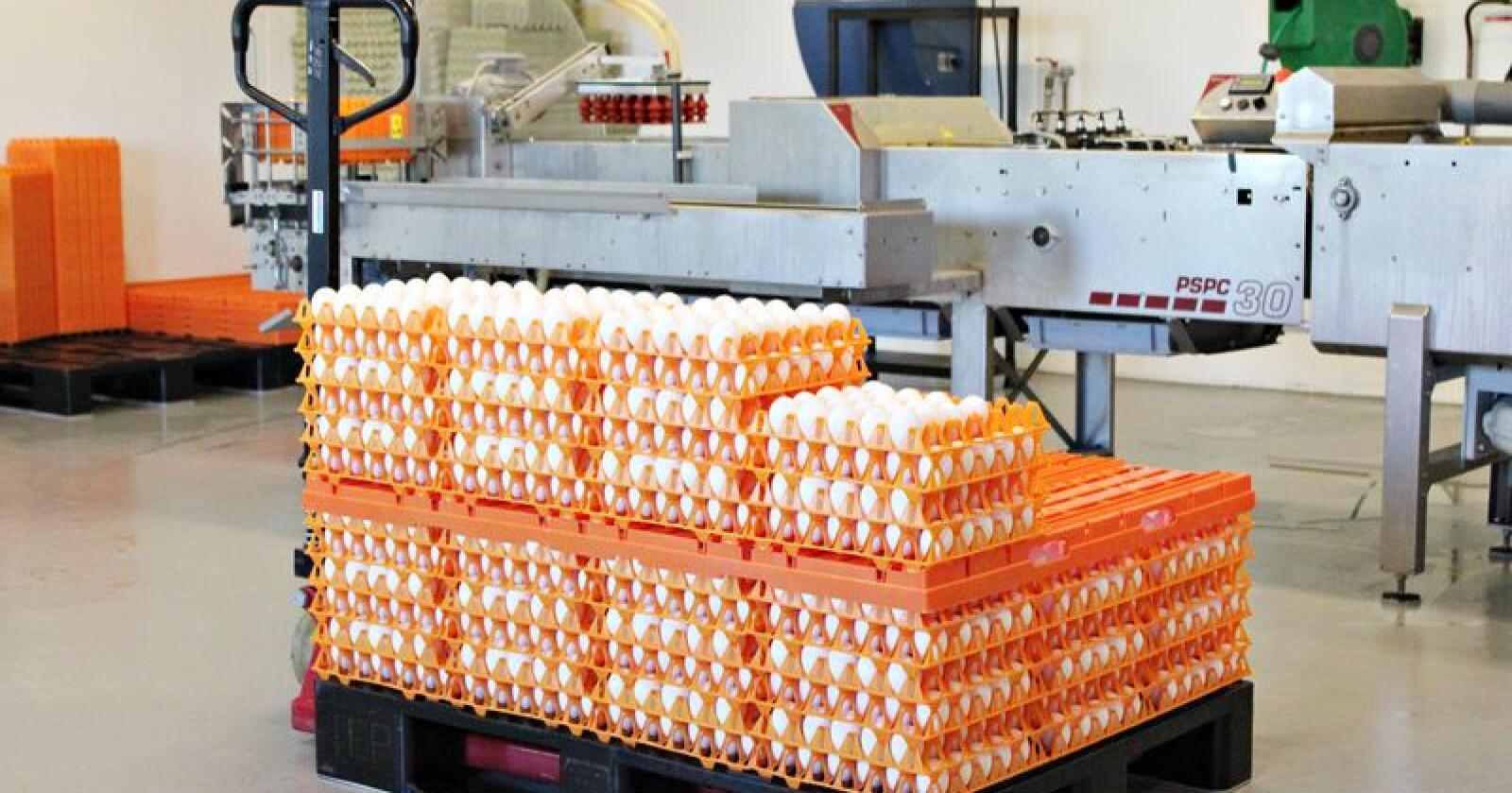 Prior blir hovedleverandør av egg til Rema1000. Alle eggene skal være fra frittgående systemer. Foto: Camilla Mellemstrand.