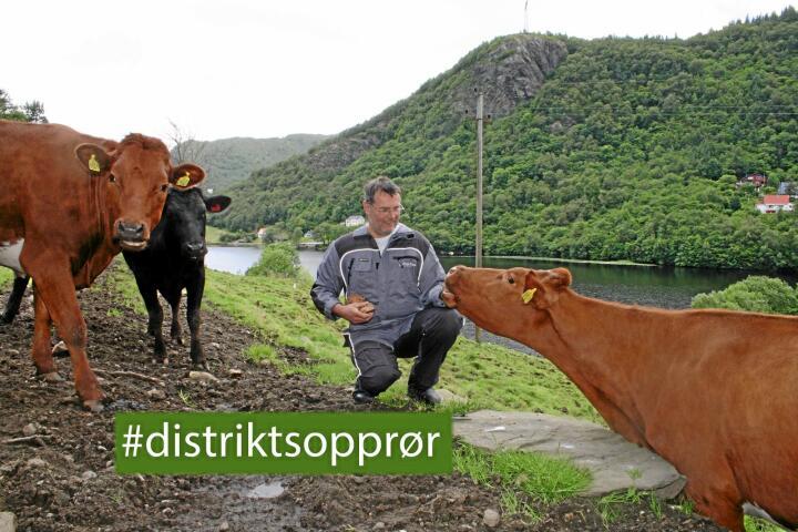 Kritisk: Vriding av tilskota mot stordrift vil ramme distriktsjordbruket, ifølgje Eivind Myrdal, som byr på ein brødbit for kyrne på sommarbeite. Foto: Bjarne Bekkeheien Aase