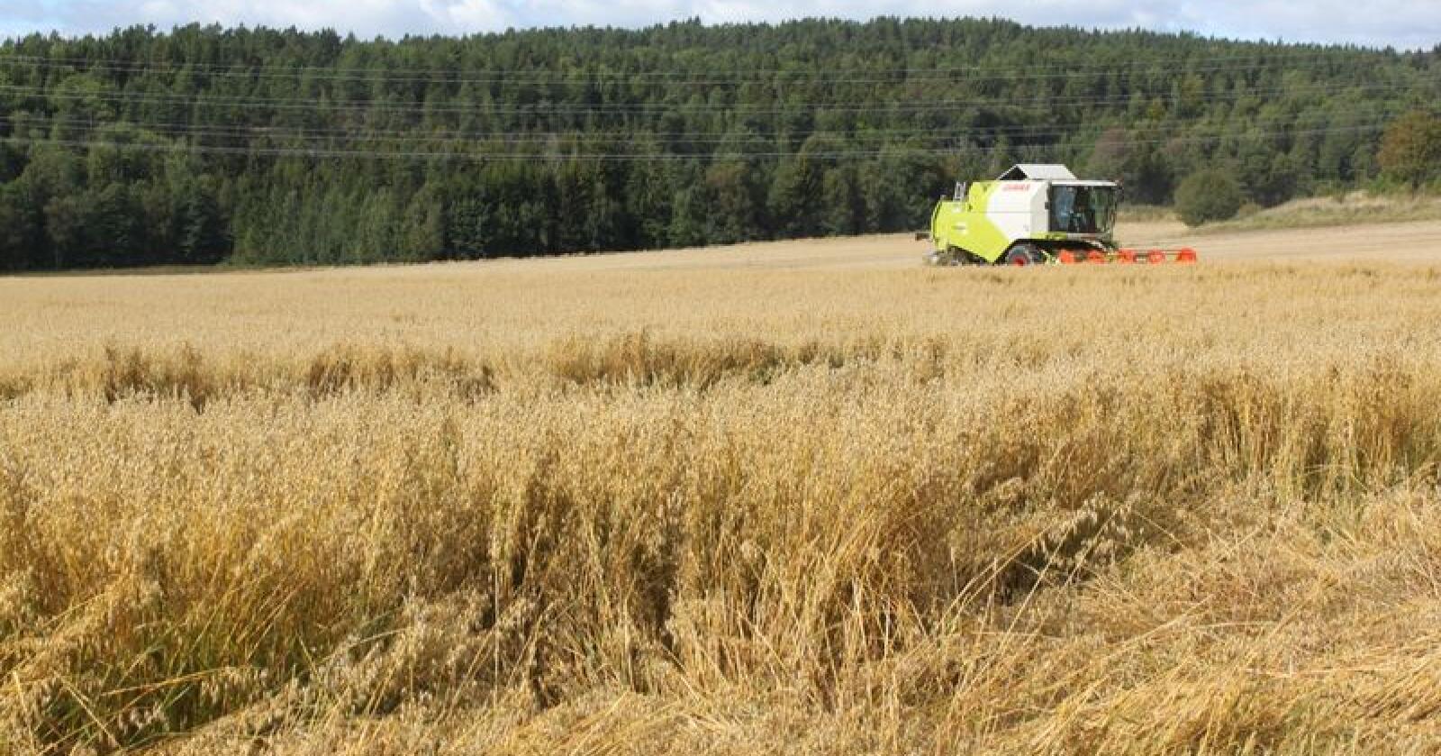 """Gjennom å rette opp i en """"feil"""" i fotosyntesen har amerikanske forskere klart å øke avlingen med 20 prosent på tobakksplanter. Nå står hvete, soya, potet og åkerbønner for tur."""