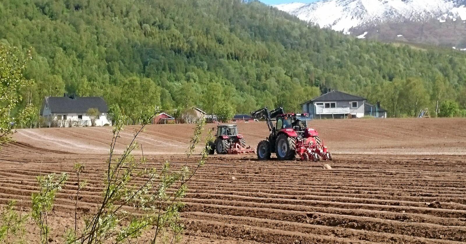 Det er utfordrende å produsere grønnsaker i Nord-Norge. Nå skal produksjonen bli enda bedre gjennom ny forskning. Bildet er fra Målselv i Troms, hvor det produseres Målselvnepe. Illustrasjonsfoto: Ulrike Naumann, Tromspotet AS.