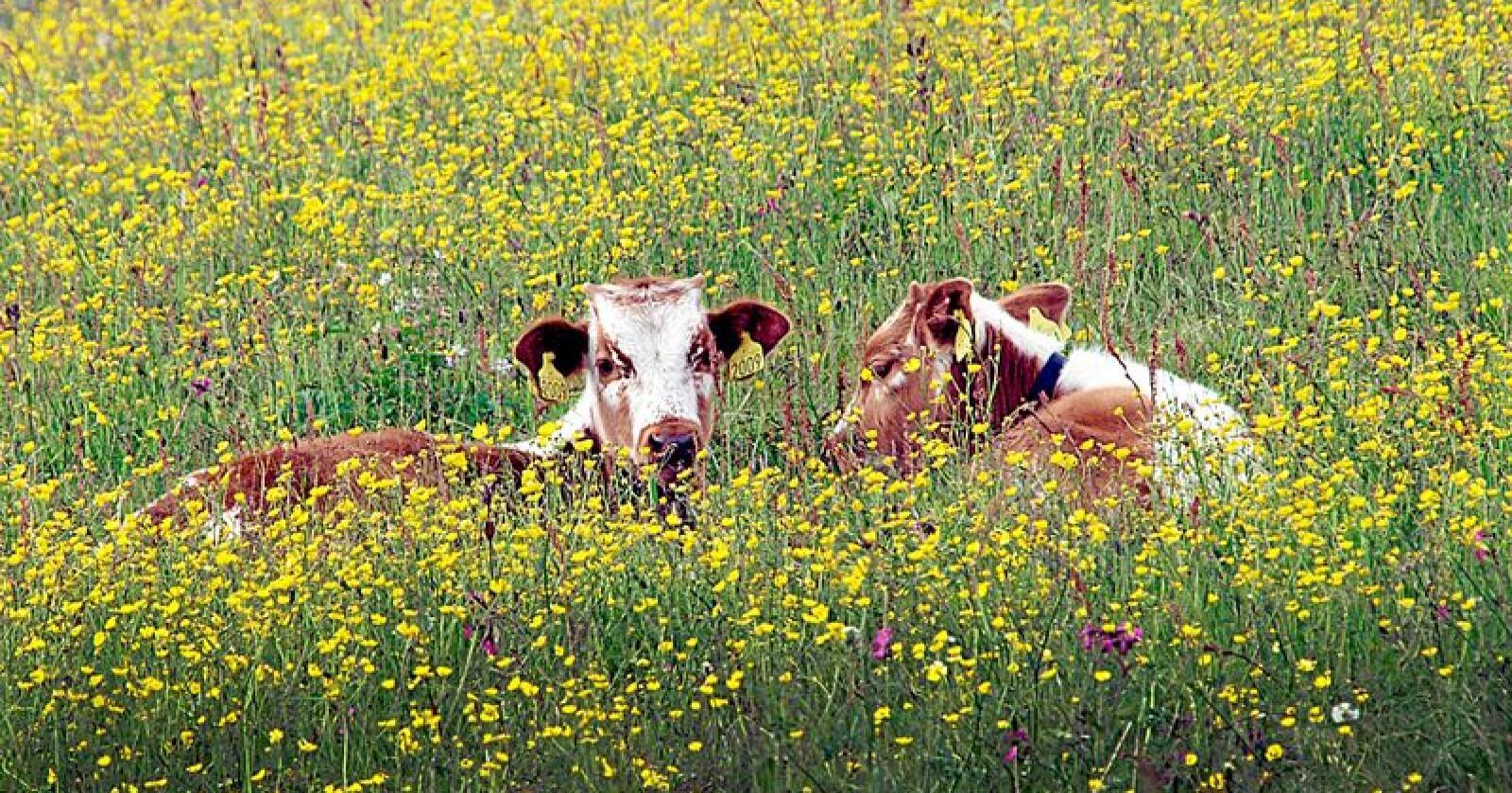Landbruket har stor betydning for biologisk mangfold og forekomsten av insekter. Foto: Bård Bårdløkken
