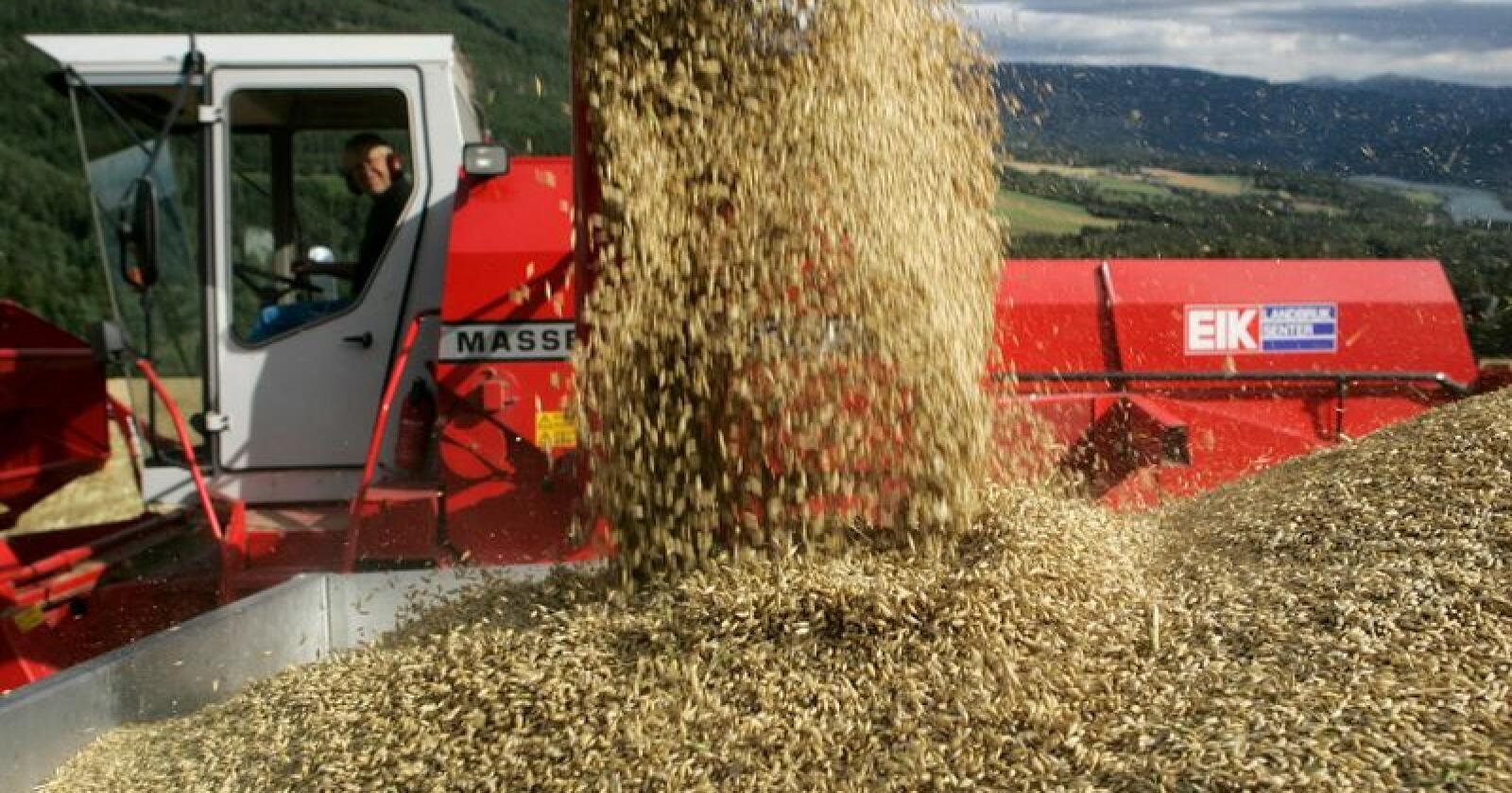 Kan det være mulig å produsere mesteparten av råvarene til kraftfôret i Norge?