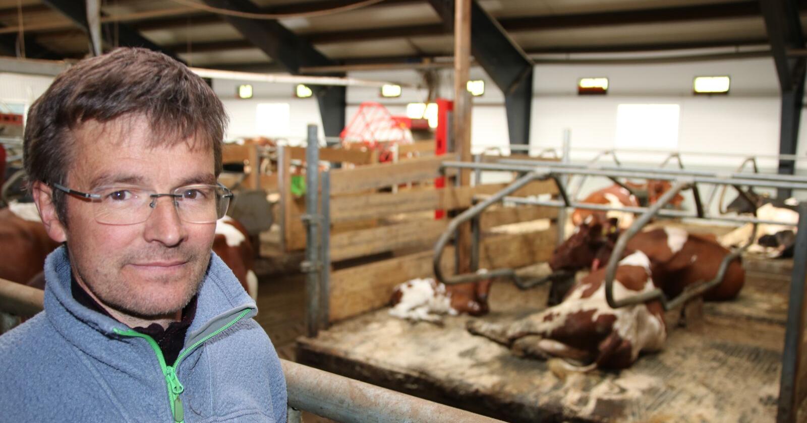 Ola lar kalvene få gå med mor til de er mellom 40 og 60 dager.  Foto: Knut Houge