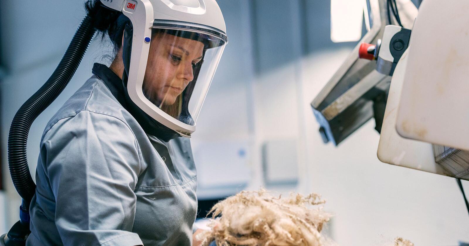 Norske ullprodusenter får tilskudd gjennom jordbruksavtalen. Tilskuddet gis pr. kilo ull og er differensiert etter kvalitet. Fra 1. september er ullprisen fra Norilia til leverandør satt til null kroner. (Foto: Sune Eriksen)