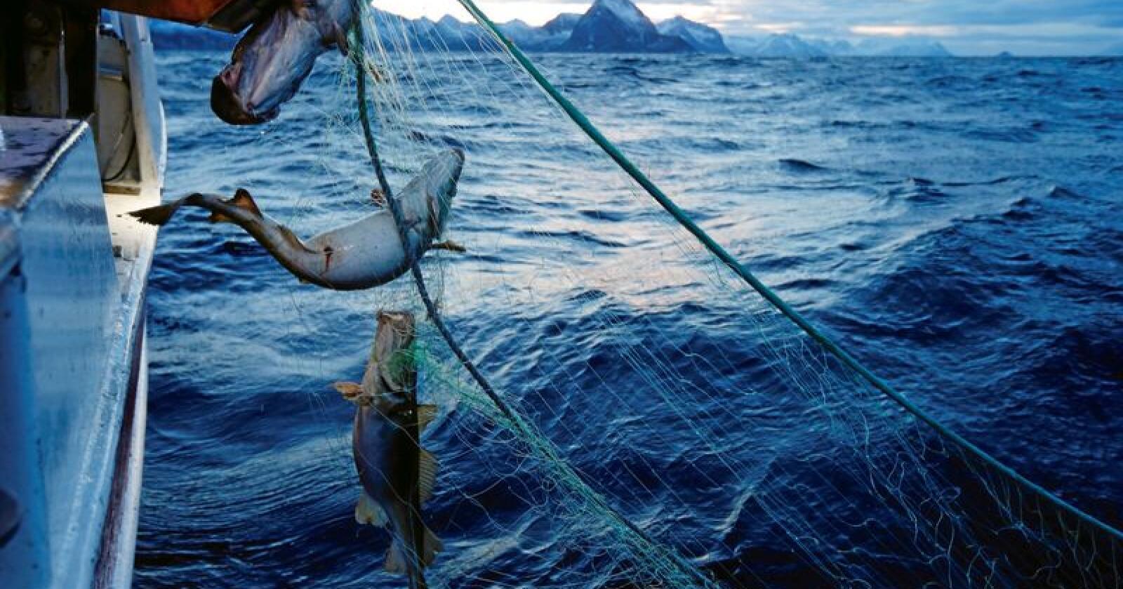 Fiskeri: Blir sentralisert, skriver Geir Pollestad. Foto: Cornelius Poppe / NTB scanpix