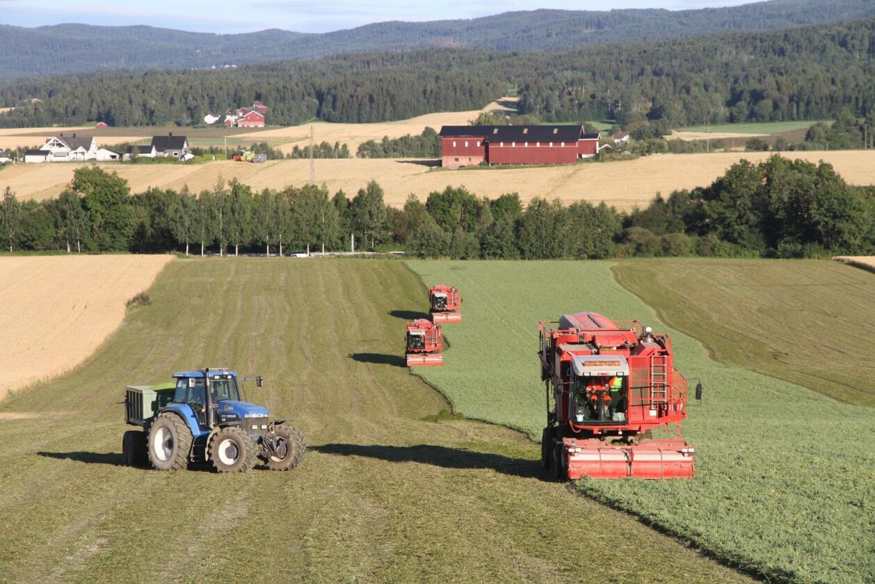 Erter: Vestfold har mye god matjord og ta vare på. Her treskes det erter for Findus. (Foto: Traktor)