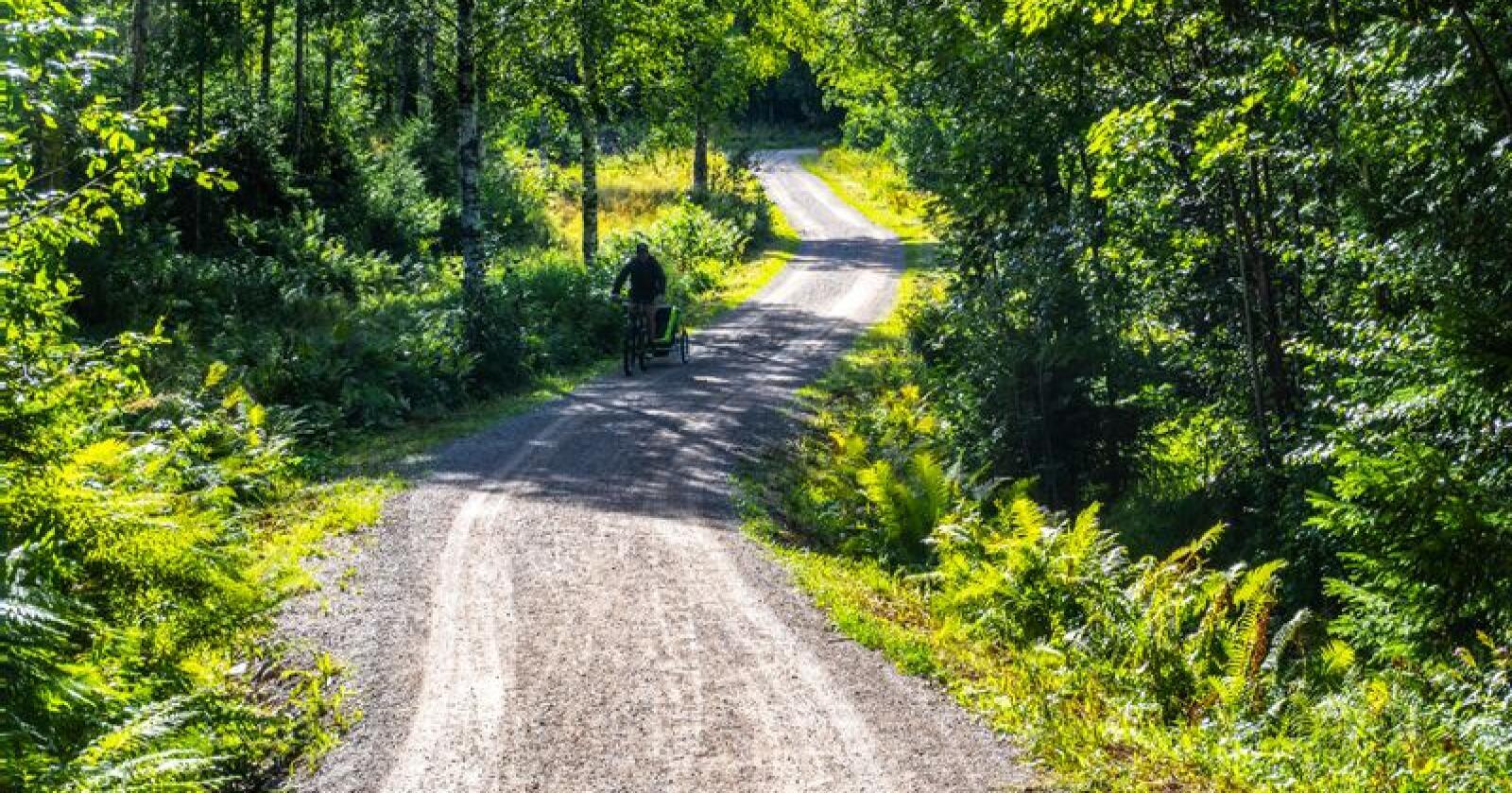 Skogsbilvei i Østmarka i Oslo. Foto: Halvard Alvik / NTB scanpix