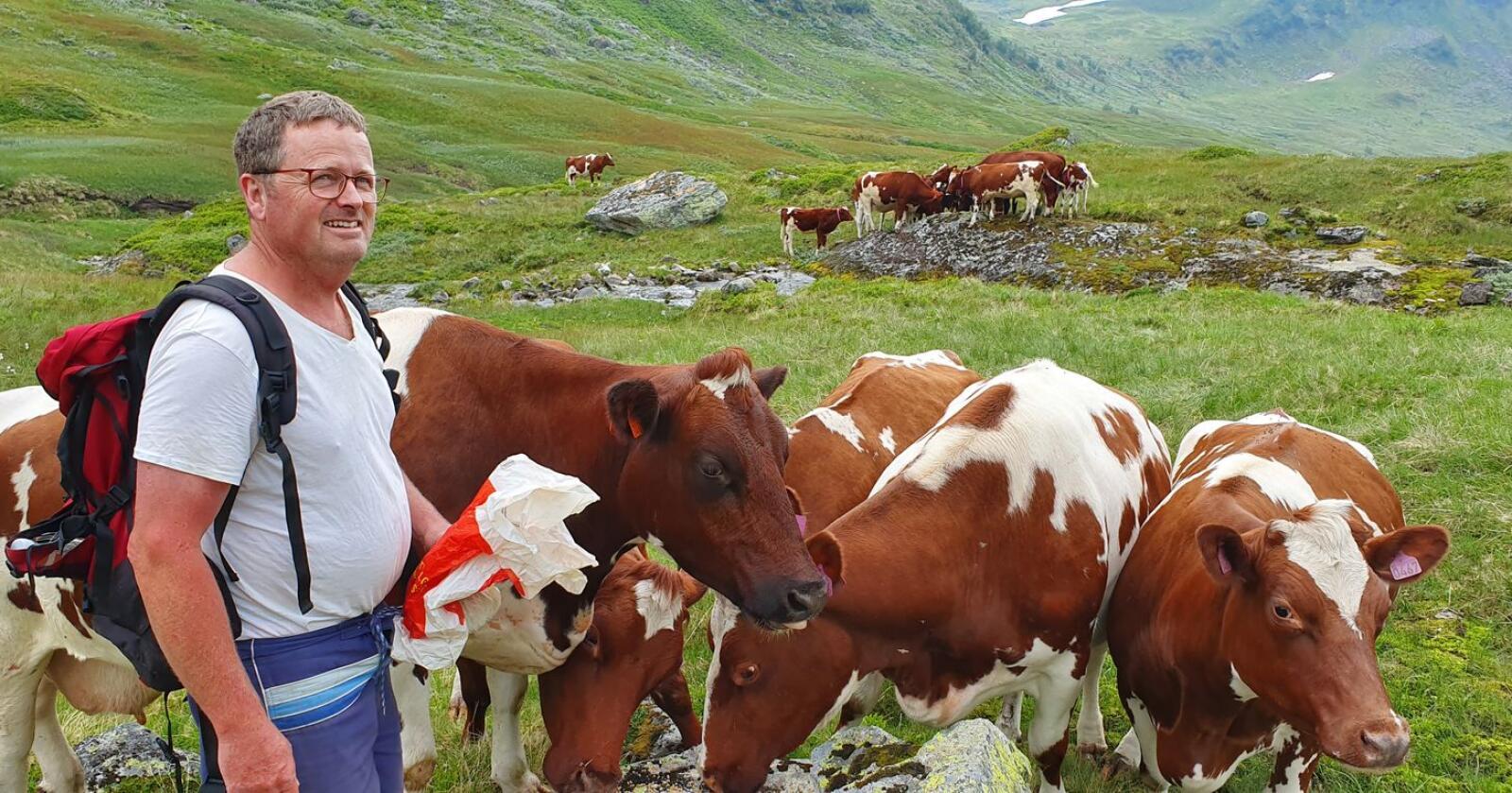 Sommermelk: Trond Olav Neteland har sendt dyra på sommerbeite i Berdalen. Men først melket han de litt lenger enn han pleier. (Foto: Foto: May Ruth Nåsen Neteland)