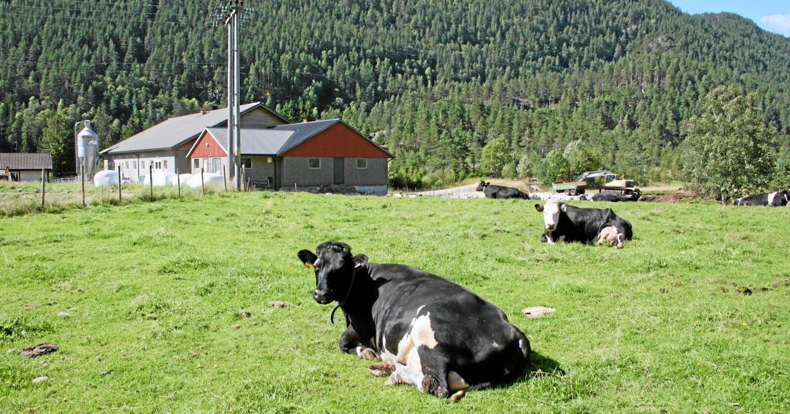 Importvekst: Osteimporten auka med nær seks prosent i fjor og svarar nå til produksjonen frå over 700 norske mjølkebruk eller rundt 10 prosent av den norske mjølkeproduksjonen. Foto: Bjarne Bekkeheien Aase