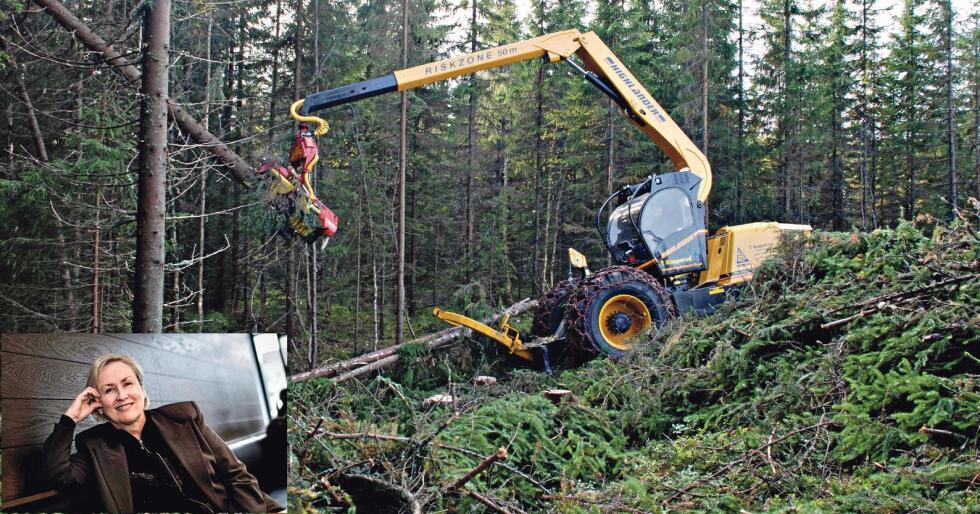 Kritisk til prioriteringene: BI-professor Eli Moen (innfelt) langer ut mot den norske, skogbaserte bioøkonomisatsingen. Mens Sverige og Finland pøser ut milliarder i egne biosatsinger, investerer Norge nesten ingenting. Samtidig har Oljefondet investert over 22 milliarder i våre to nabolands skogindustri. (Arkivfoto)