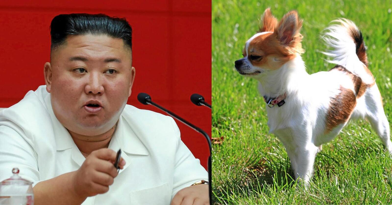 Illustrasjonsfoto: Korean Central News Agency/Korea News Service via AP/Jiri Vaclavek/Mostphoto