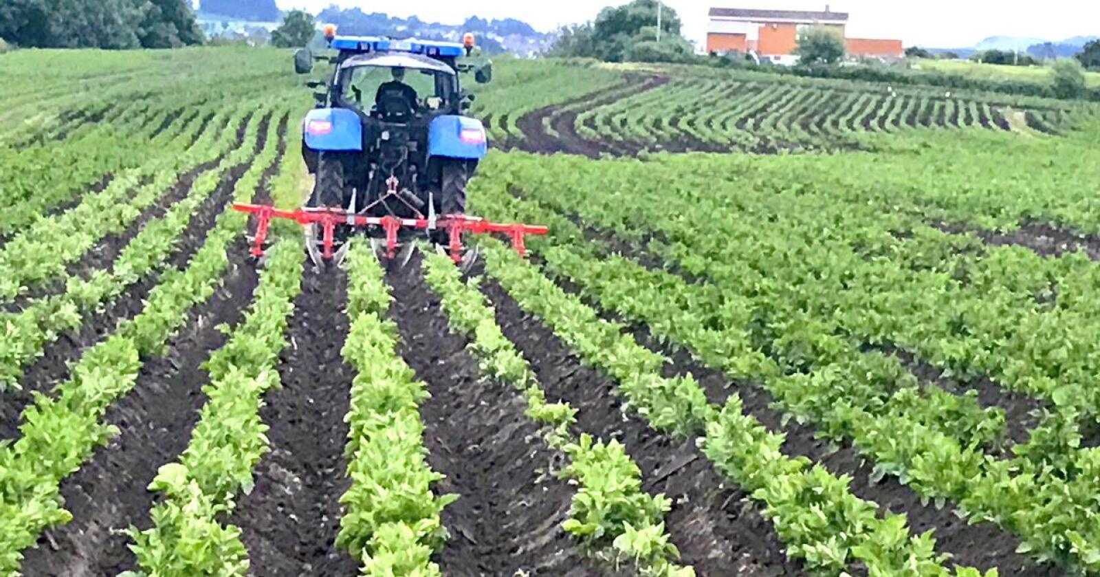 Prisen deles ut annethvert år. Randaberg kommune fikk prisen i 2019 på bakgrunn av sine tydelige mål om å ta vare på jordbruksareal i sin kommuneplan. (Foto: Bethi Dirdal Jåtun)