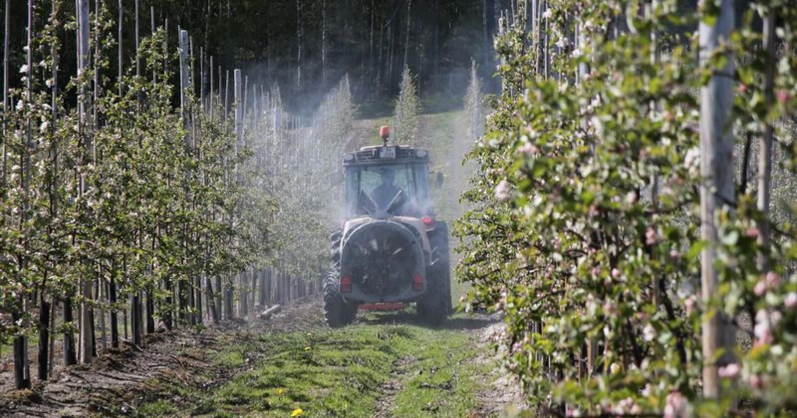 Arkivfoto: Norsk Landbruk