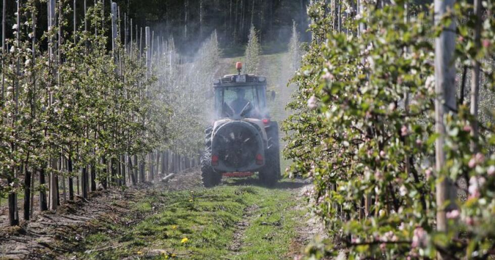 Bondelaget, Gartnerhallen og Norsk Landbruksrådgivning mener alle det er alvorlig mangel på plantevern for frukt- og grøntprodusenter. (Arkivfoto)