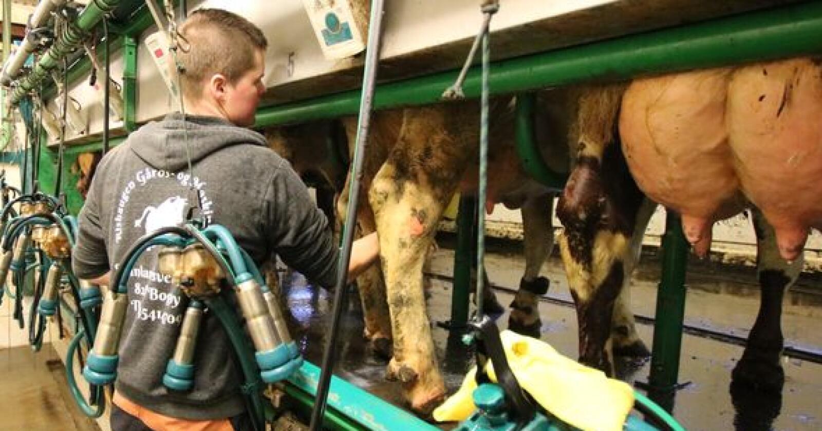 KUMJØLK: Det har blitt produsert nesten 20 millioner flere liter kumjølk i første tertial sammanlignet med samme periode i fjor. Arkivfoto: Norsk Landbruk