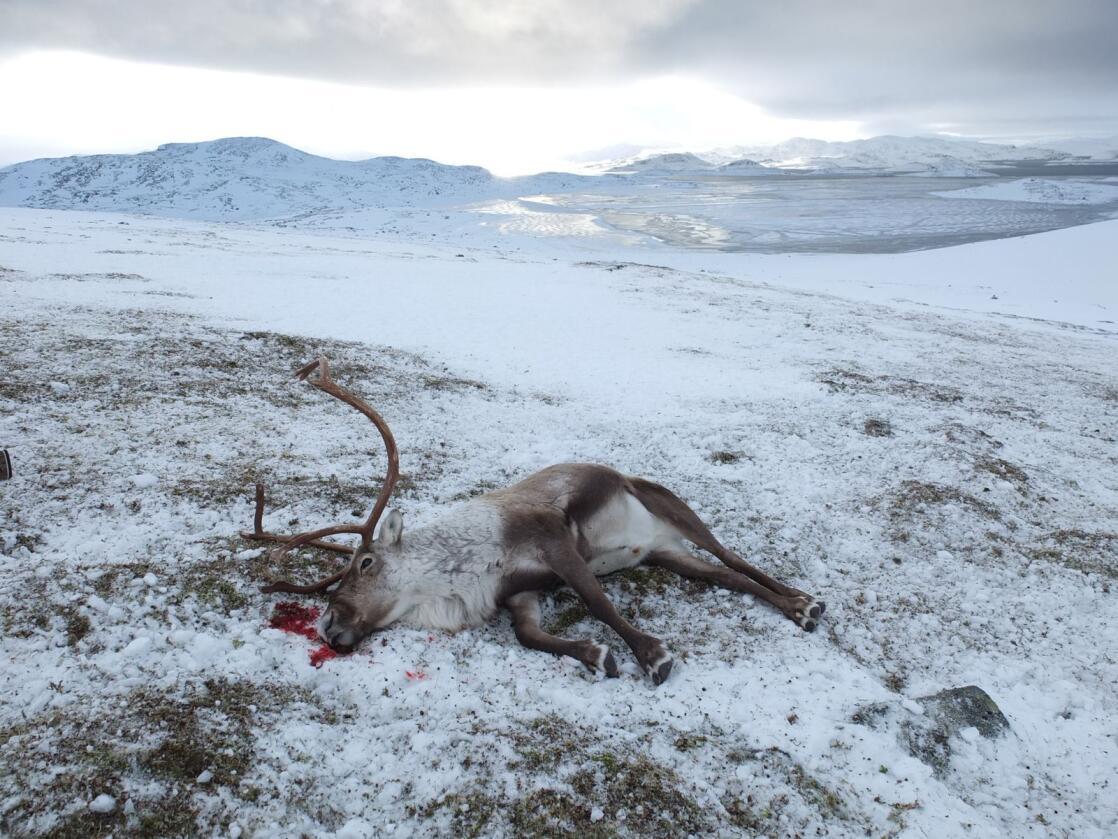 Foto: Petter Braaten, Statens naturoppsyn
