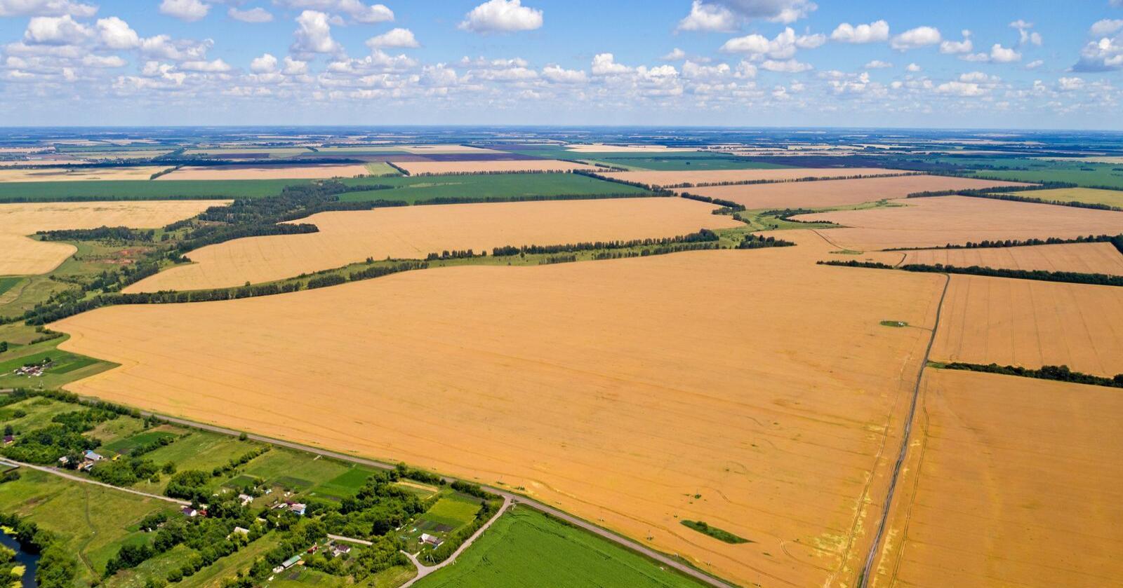 Russland er verdens største eksportør av korn, og eksporterer over en femtedel av all korn i verden. Foto: Mostphotos